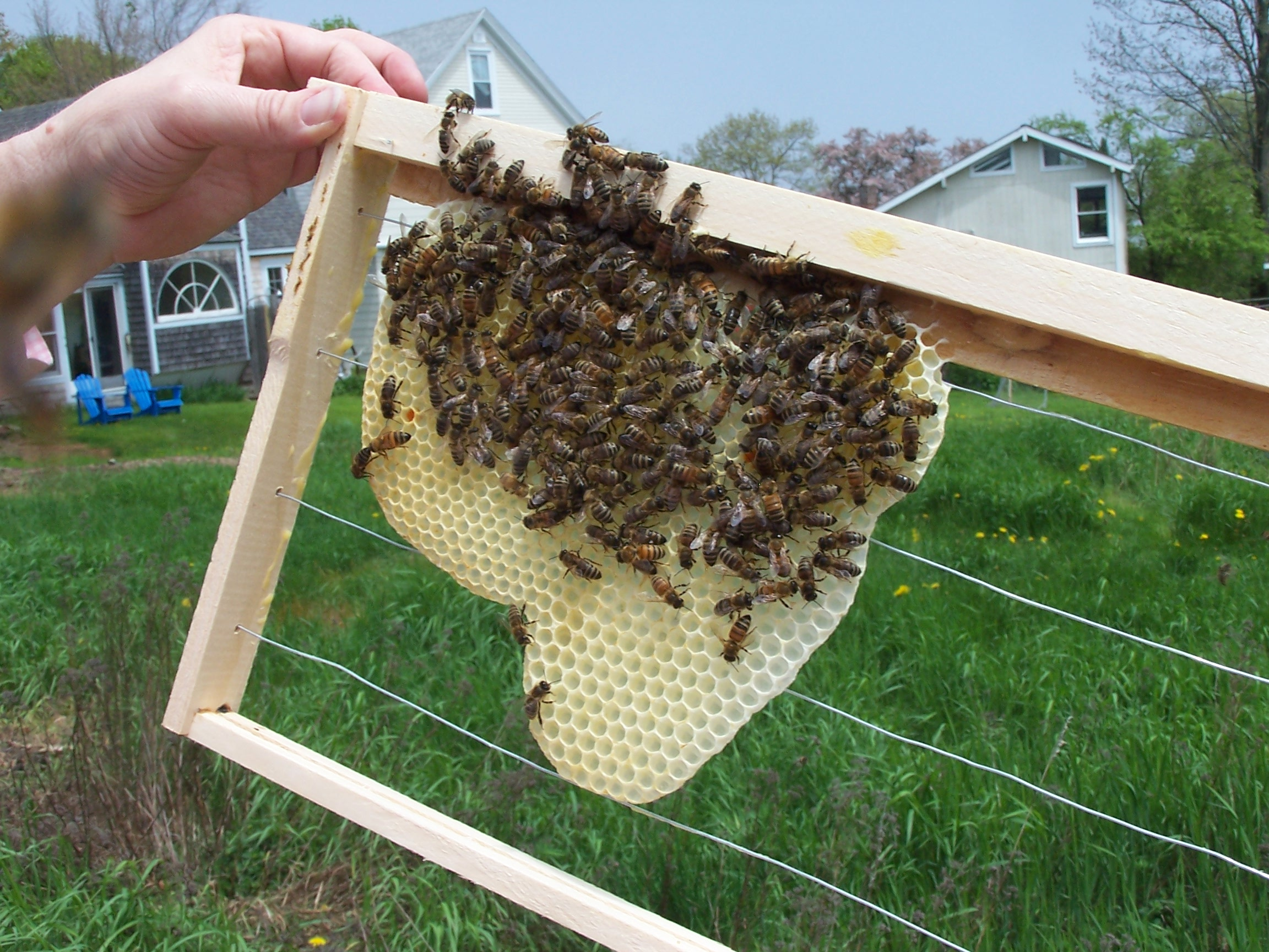 What do bees make wax