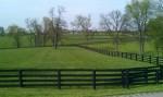 1 Kentucky Bluegrass
